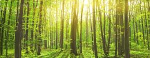 bigstock-woods-44771632-900x350